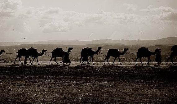silhouette-caravan-camel.jpg
