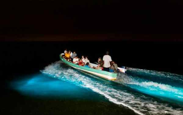 bioluminiscencia-chacahuapg