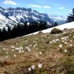 Frühlingserwachen im Entlebuch – auf den Farneren