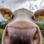 Kemmeriboden: Wandern, Kühe und Merängge – und mit Beat Feuz!
