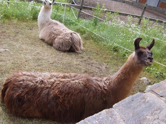Lamas am Pressegger See