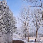 trockener Weg, weiße Bäume