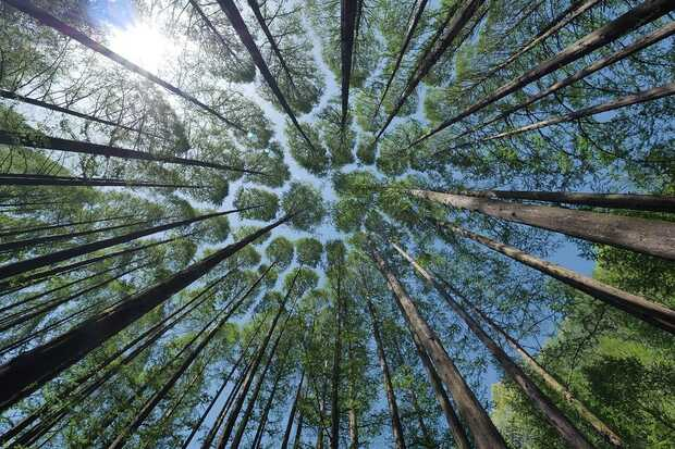 Inteligencia Artificial ayuda a decidir dónde es mejor plantar árboles para minimizar el impacto del carbono en el medio ambiente