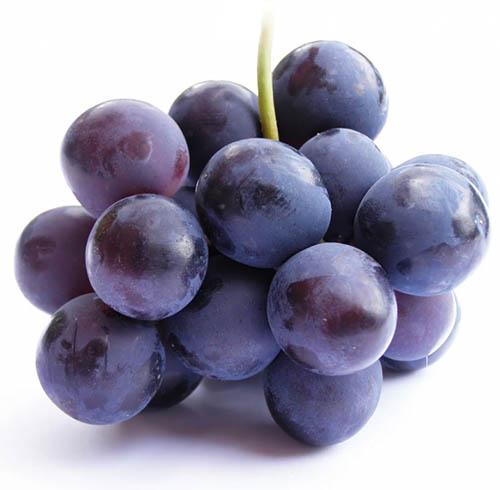 Uva-Pinot-Noir-Alta-Pavina
