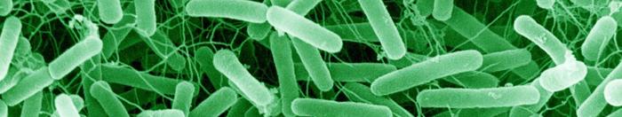 gut-bacteria-crop