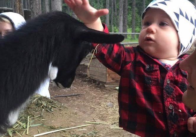 Petting Zoo at Beaver Lake