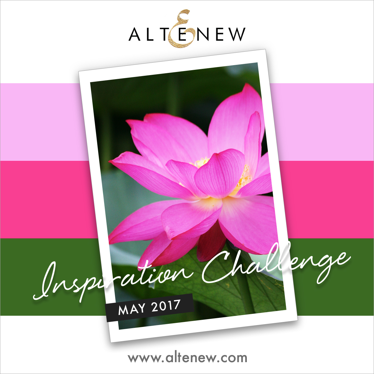 Altenew May Challenge Winner