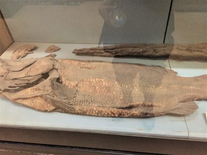 A mummified fish. I was really surprised by the size of this unidentified fish.