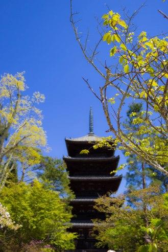 The five storey pagoda of the Ninnaji temple.