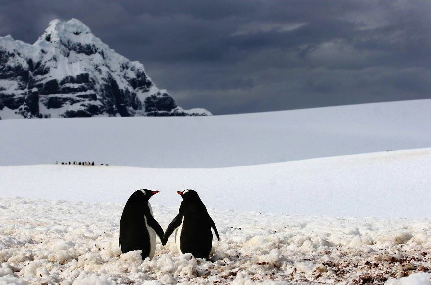 20 Adorable Couples That Prove Love Exists In The Animal Kingdom Too