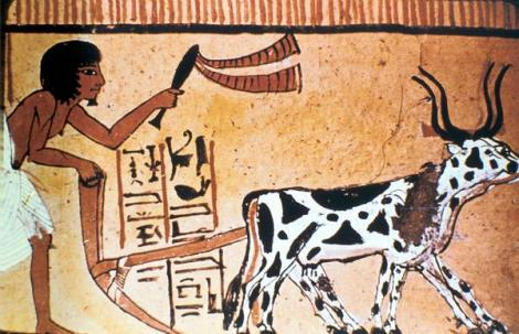 6 Ancient Egyptian Inventions we still use today - First Ox-Drawn Plows