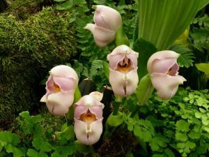 Weird Flowers - 10. Swaddled Babies (Anguloa uniflora)