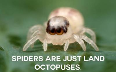 You'll Never Look At Animals The Same Again After Reading This