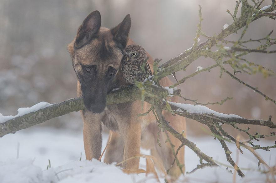 ingo-else-dog-owl-friendship-tanja-brandt-9