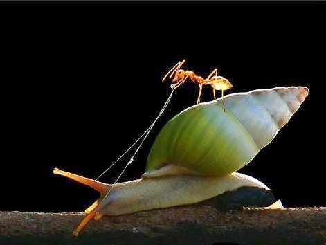 Incredible Photos Of Animals Riding On The Back Of Other Animals