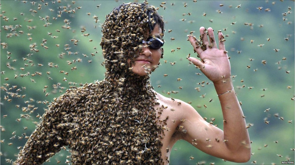 Competitive Bee Wearing