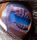 Extreme Close-Ups of Animal Eyes