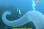 Giant, Tubular Creature Caught On Camera Under The Sea