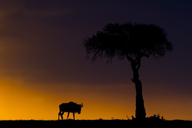 masai-mara-goldstein-8