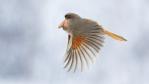 crazy species bred in Photoshop (29 photos)