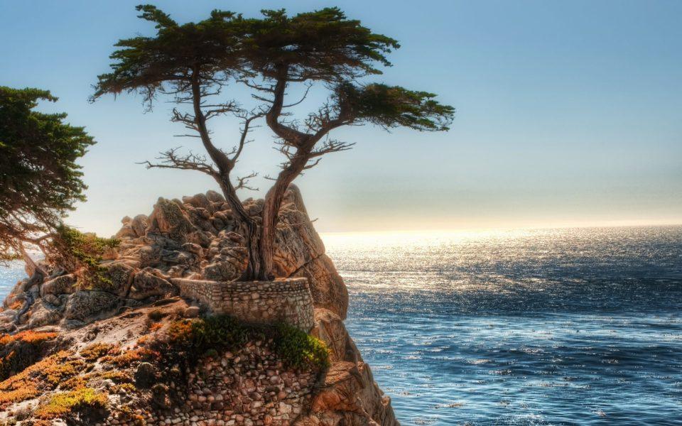 Beautiful Trees - Cliff Tree Coast