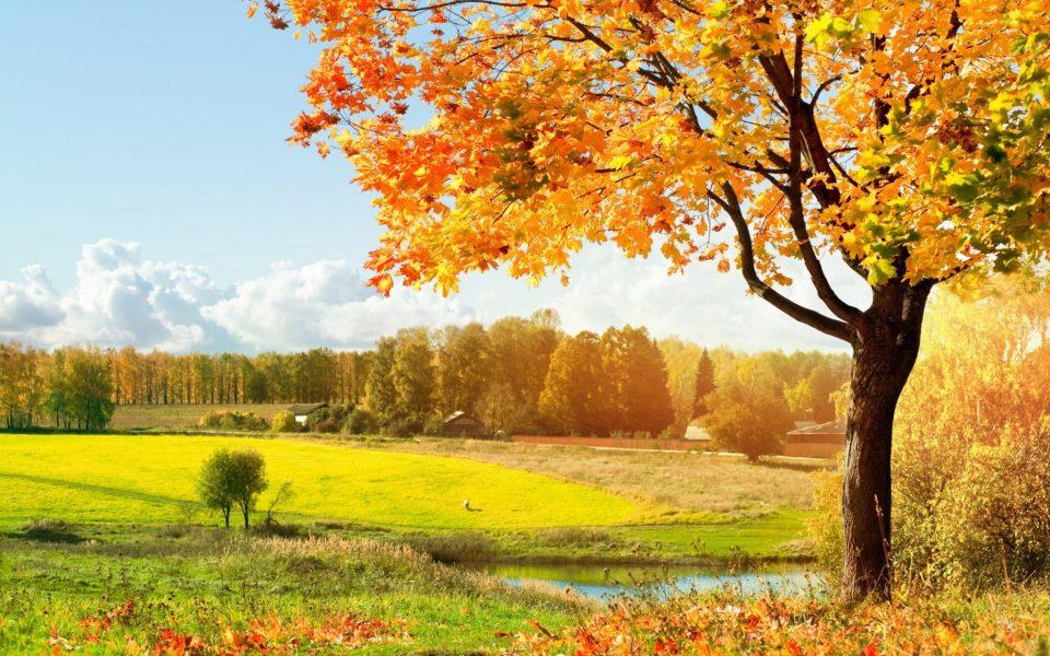 Beautiful Trees - Golden fields