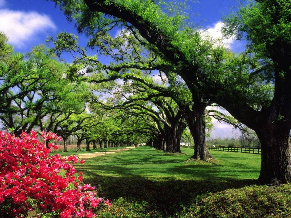 Beautiful Trees - Green and Red