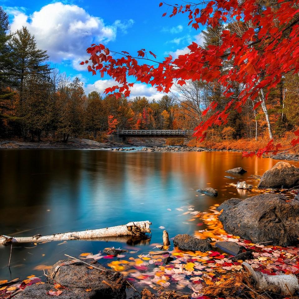 Beautiful Trees - Maple Tree
