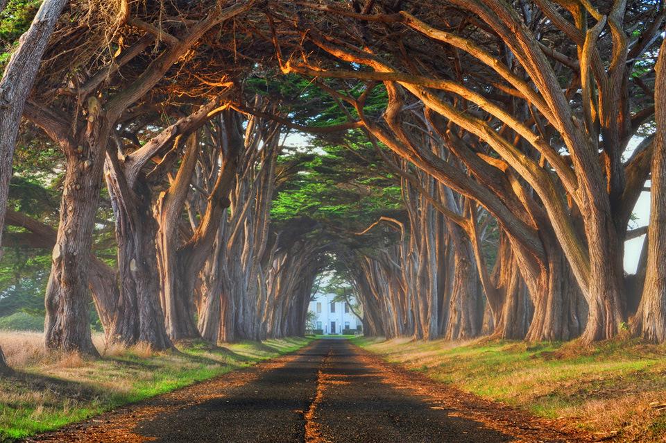 Beautiful Trees - Natural tree tunnel