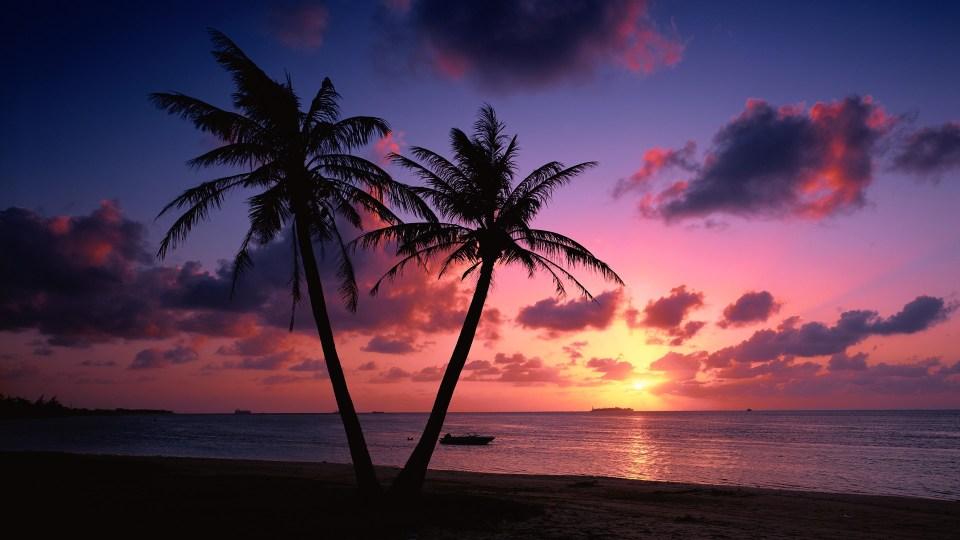Beautiful Trees - Palms Sunset Beach