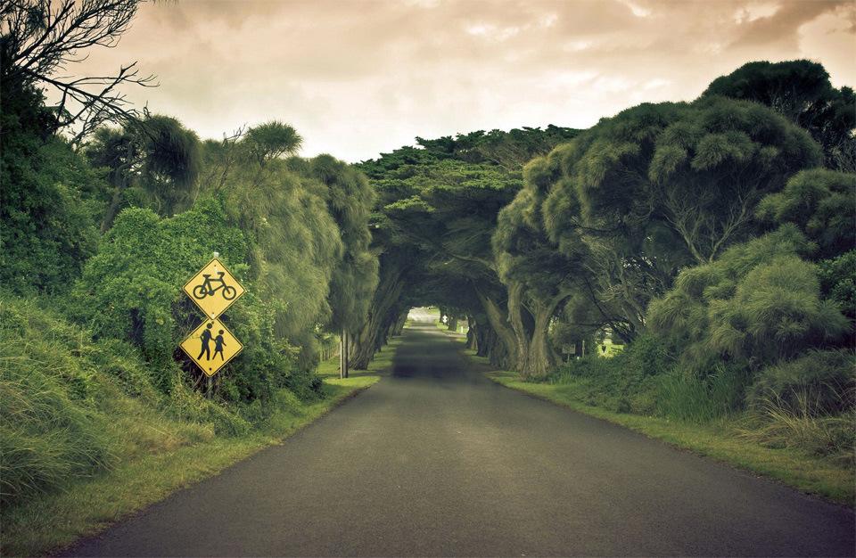 Beautiful Trees - Road tree tunnel in Australia