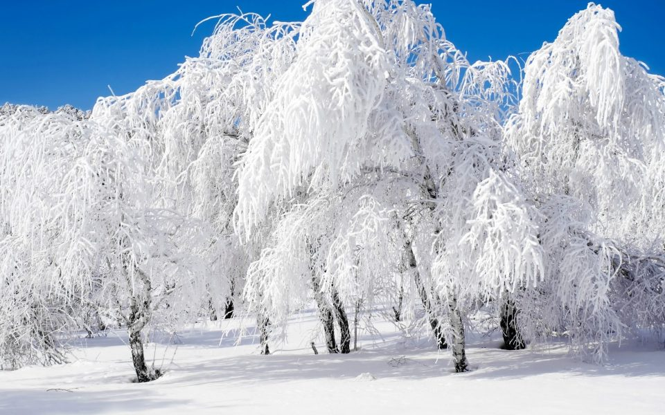 Beautiful Trees - Snow Winter Trees