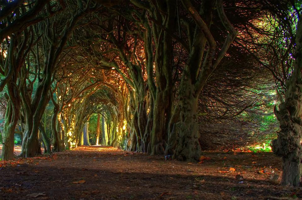 Beautiful Trees - Tree tunnel in Ireland
