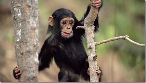 Mayan Spirit Animal - Monkey