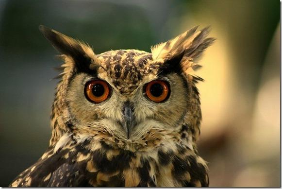 Mayan Spirit Animal - Owl