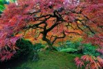 50 of The Most Beautiful Trees In The World
