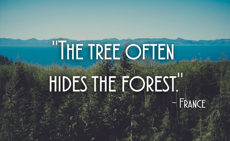21 Beautiful And Inspirational Proverbs From Around The World - The Tree Often Hides The Forest