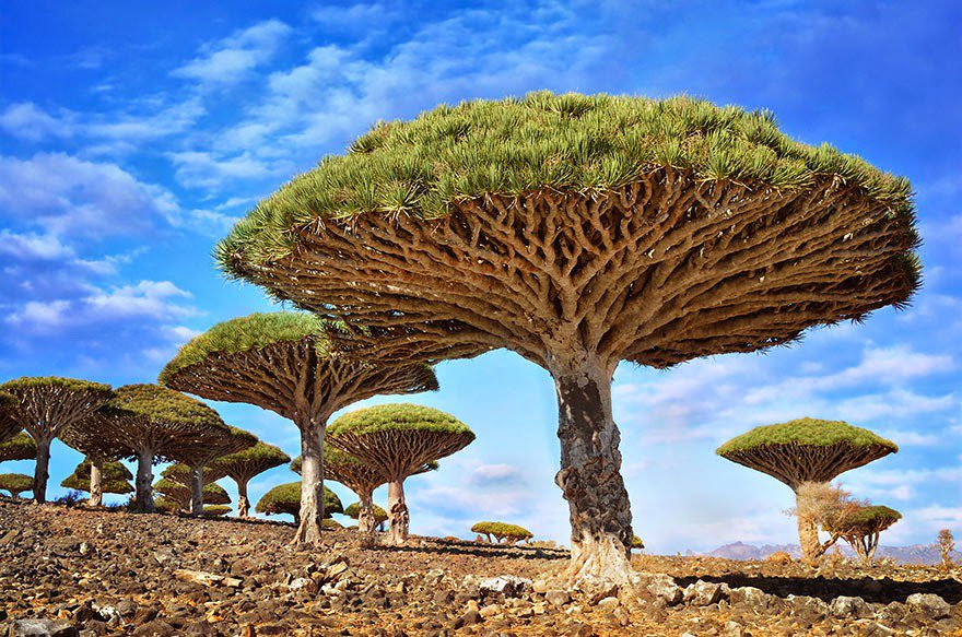 16 Trees That Will Drop Your Jaw
