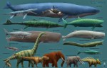 Meet the Blue Whales, the Largest Creatures On Earth