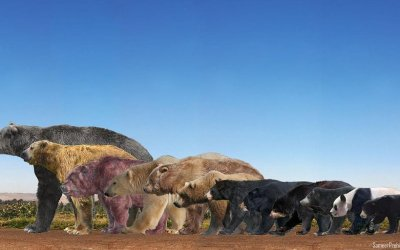 Which is (was) the largest bear on Earth?