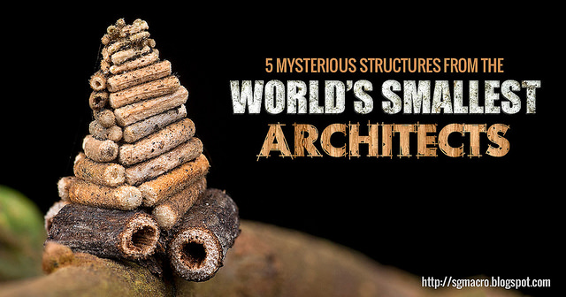 7 Mysterious Structures From The World's Smallest Architects