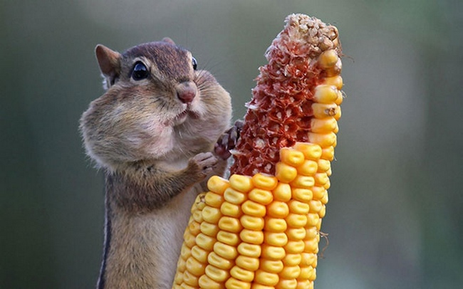 Photos Of Animals Eating That'll Make You Smile - 4
