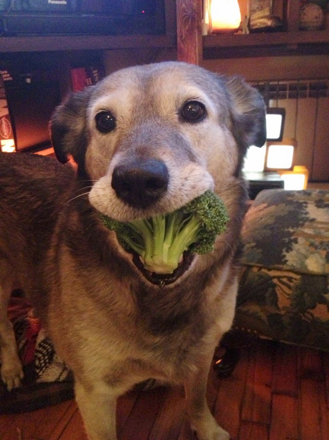 Photos Of Animals Eating That'll Make You Smile - 7