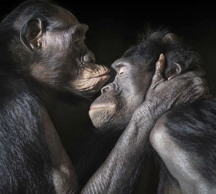 Super Cute Animals Sharing A Kiss That Will Melt Your Heart