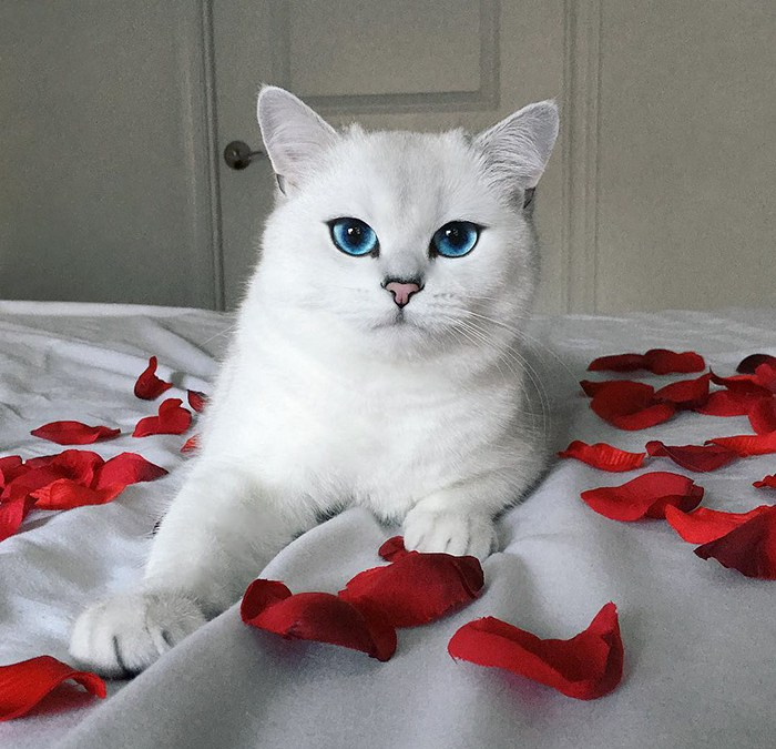 The Cat With The Most Beautiful Eyes