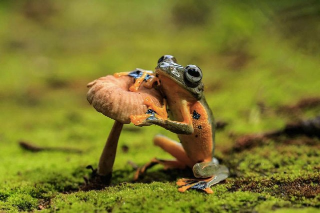 Weird and Goofy Looking Frogs