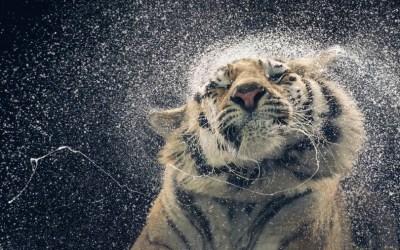 30 Marvelous and Breathtaking Animal Photographs