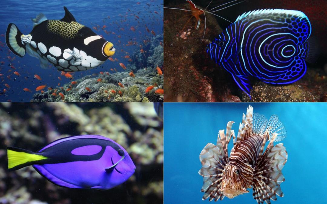 Stunning Ocean Dwellers