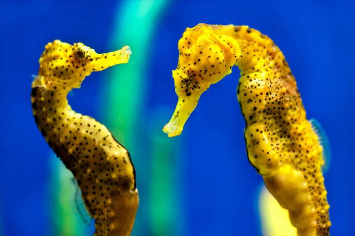 The Astonishingly Beautiful World of Seahorses and Dragons!