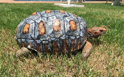 Tortoise Receives World's First 3D Printed Shell